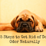 how to get rid of dog odor naturally