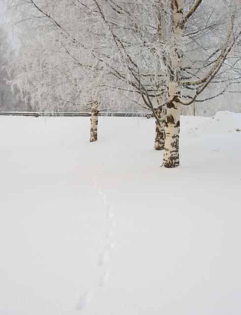 winterwhiteness
